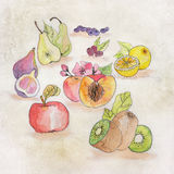 Fruit illustration with watercolor Stock Photography