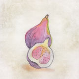 Fruit illustration with watercolor Royalty Free Stock Photography