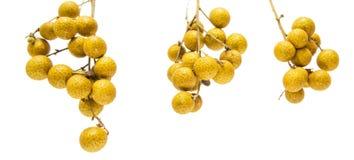 Fruit IV de plot réflectorisé Image stock