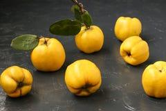 Fruit jaune mûr de coing sur le fond foncé photos libres de droits