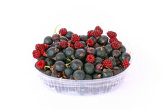 Fruit of Jostaberry Stock Photography