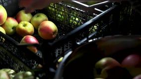 Fruit juteux mûr clips vidéos