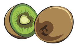 Fruit of Kiwi Stock Photo