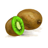 Fruit kiwi vector illustration  hand drawn Royalty Free Stock Image