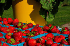 Fruit in landbouwersmarkt het plaatsen Royalty-vrije Stock Afbeelding