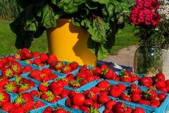 Fruit in landbouwersmarkt het plaatsen Stock Foto