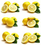Fruit lemon Stock Photography