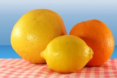 Fruit lemon orange and grape fruit Royalty Free Stock Photography