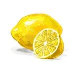 Fruit lemon Vector illustration  hand drawn Royalty Free Stock Photo