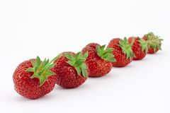 Fruit line Stock Images