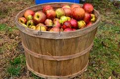 Fruit, Local Food, Produce, Apple stock photos