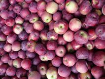 Fruit, Local Food, Produce, Natural Foods stock images