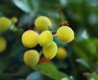 Fruit: lychee Royalty-vrije Stock Foto