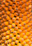 Fruit mûr Photos libres de droits