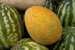 Fruit   melon   fresh  ripe Royalty Free Stock Photos
