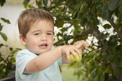 Fruit mignon de cueillette de petit garçon d'arbre Photo stock