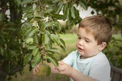 Fruit mignon de cueillette de petit garçon d'arbre Photo libre de droits