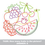Fruit mishmash colorful set in vector. Royalty Free Stock Photography