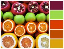 Fruit mix row with palette color swatches Royalty Free Stock Image