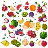 Fruit mix. Set fruit icons. Vector illustration on white background. Fruit pattern. Assorted fruits Stock Photography