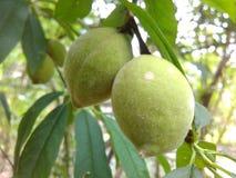 Fruit. Natural nature green closeup Stock Images