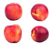 Fruit nectarine Stock Photography