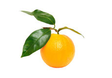 Fruit orange d'isolement sur le blanc Images libres de droits