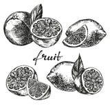Fruit orange, lemon and lime set hand drawn vector sketch Stock Images