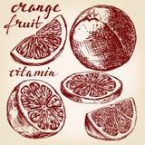 Fruit orange set hand drawn  Stock Photo