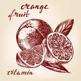 Fruit orange set hand drawn Royalty Free Stock Photo