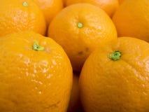 Fruit oranges Stock Images