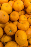 Fruit oranges Stock Images