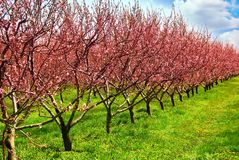Fruit orchard Royalty Free Stock Images