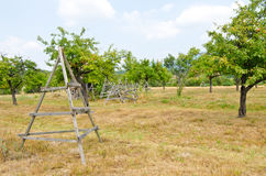 Fruit orchard. royalty free stock photo