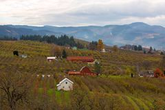 Fruit orchard Farmland in Hood River OR USA Autumn season. Fruit orchard red barns and farmhouses in Hood River Oregon during fall season USA America Stock Image