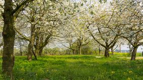 Fruit orchard Royalty Free Stock Photography