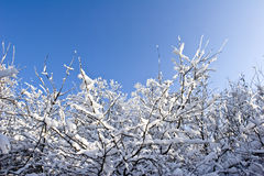 Fruit orchard in winter Stock Image