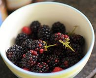 Fruit from our garden. Rapsberries and blackberries are seasonal fruit from our garden Royalty Free Stock Photo
