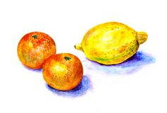 Free Fruit Painting In Watercolor. Handmade Illustration For Decor. Royalty Free Stock Photo - 183392845