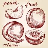 Fruit peach set hand drawn Stock Photos