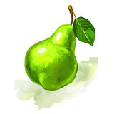 Fruit pear  Vector illustration  hand drawn Stock Photo