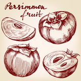 Fruit persimmon set hand drawn vector illustration sketch Stock Photography