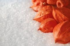Fruit of Phizalis. Garden-stuffs of phizalis on to snow Stock Photo