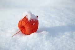 Fruit of Phizalis. Garden-stuffs of phizalis on to snow Stock Image