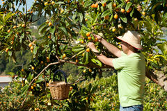 Fruit picker Stock Photos