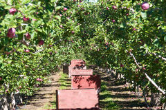 Fruit picker boxes Royalty Free Stock Image