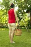 Fruit picker girl Stock Images