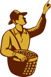 Fruit Picker Worker Pointing Woodcut royalty free illustration