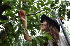 Fruit picking girl at outer place Stock Image