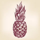 Fruit pineappl hand drawn vector llustration Royalty Free Stock Photography